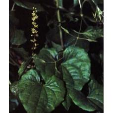 Адамов корень или Тампус обыкновенный (целебные травы 50г)