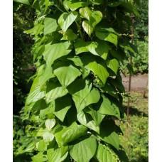 Диоскорея кавказская (целебные травы 50г)