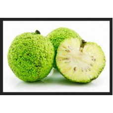 Маклюра (Адамово яблоко) 1 плод