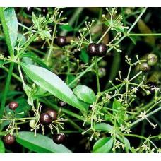 Марена красильная (целебные травы 50г)